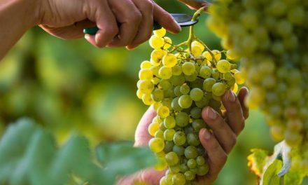 Прабываць у Езусе — прыносіць плод